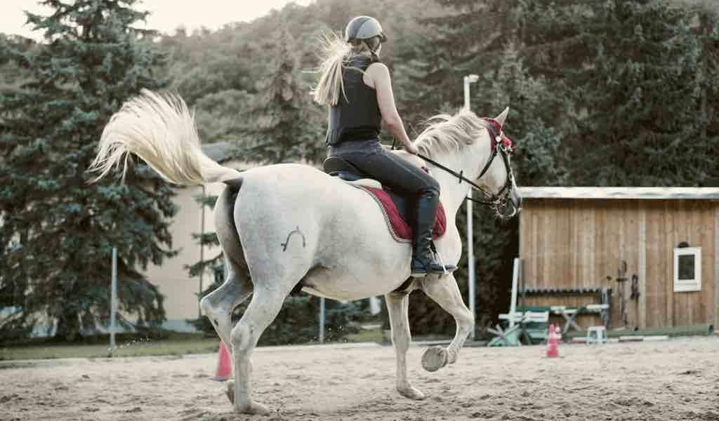 Horseback riding and safety